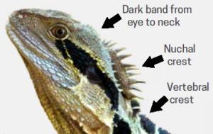 Identifying a Dragon